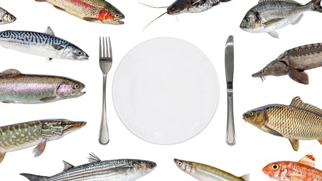 ilustração com vários tipos de peixes à volta de um prato vazio e talheres