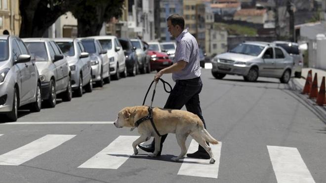 invisual a atravessar a passadeira com cão-guia