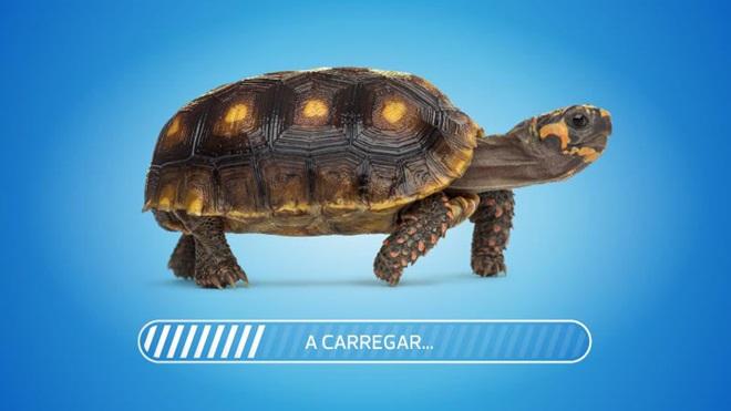 tartaruga a andar