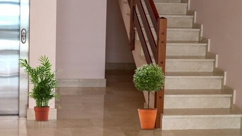 Vasos de flores nas escadas do prédio dá coima