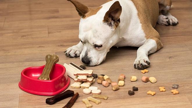 cão a comer biscoitos espalhados no chão ao lado de uma tigela com um osso