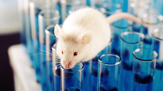 animais laboratorio