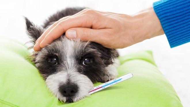 assistencia animais