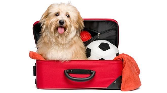 Cão dentro de uma mala de viagem