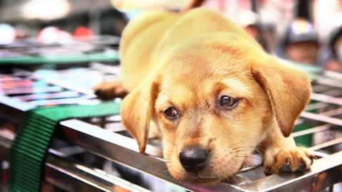 Expor cães e gatos nas montras das lojas vai passar a ser proibido
