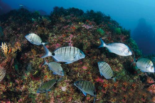 De novo no mar: o mergulho pode chegar aos 18 metros.