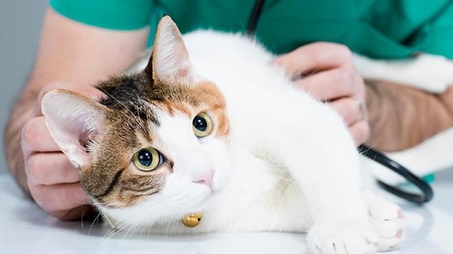 doencas gatos