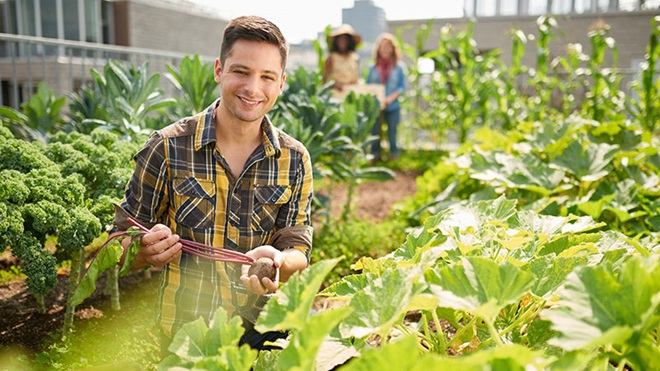 agricultor em horta urbana a plantar legumes