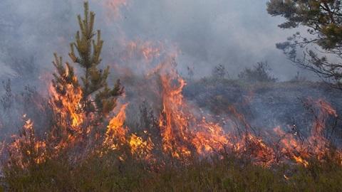 incêndio numa floresta