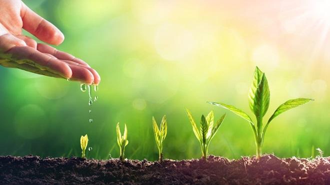 mão a regar pequenas plantas que estão na relva