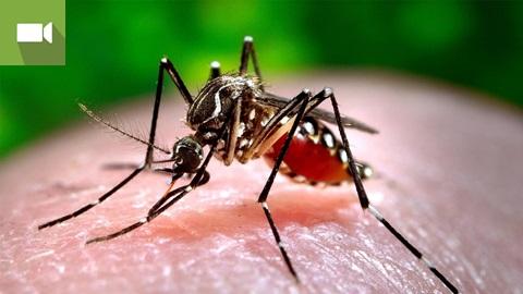 Viagens: proteja-se de doenças tropicais causadas por mosquitos