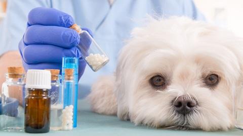 Venda de antibióticos sem receita para animais