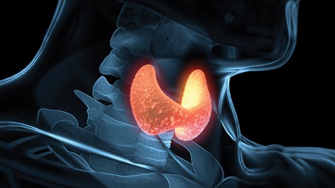 ilustração sobre tiroide