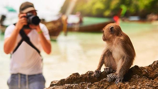 Homem a fotografar macaco que está em cima de uma rocha.