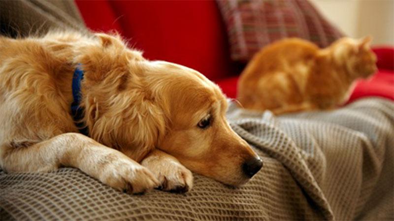 Animais de estimação: obrigações dos donos