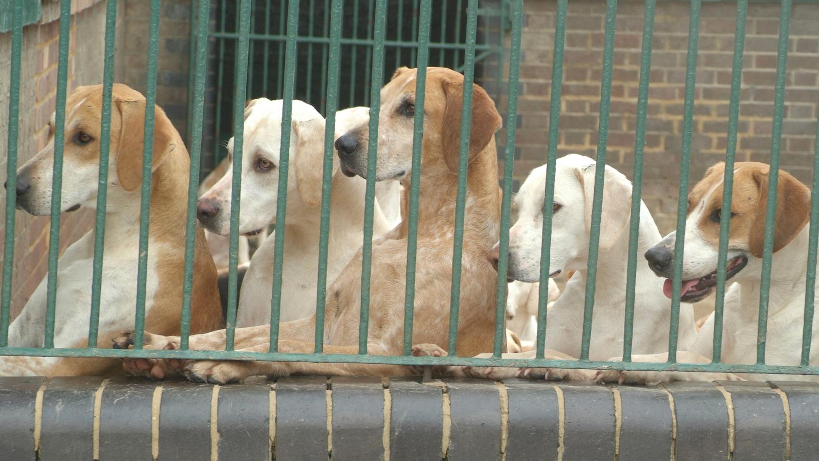 Ao fim de 15 dias sem serem reclamados pelos respetivos donos, os animais errantes passam a ser considerados abandonados e são encaminhados para adoção.